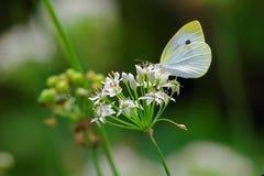 El agitar de las mariposas fotografía de archivo libre de regalías