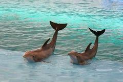 El agitar de los delfínes Fotos de archivo libres de regalías