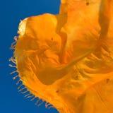 El agitar en el viento Foto de archivo libre de regalías