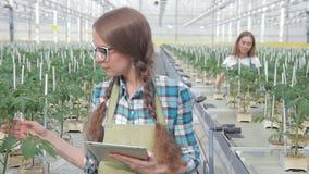 El agrónomo de la mujer examina las plantas verdes en invernadero en hidrocultivo dentro almacen de metraje de vídeo
