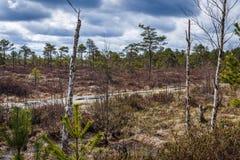 El agua azul del pantano, los árboles muertos es visible en la vecindad Imágenes de archivo libres de regalías
