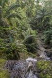 El agua cae en la isla tropical de Sao Tome fotografía de archivo