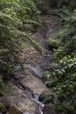 El agua cae en la isla tropical de Sao Tome fotos de archivo libres de regalías