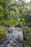 El agua cae en la isla tropical de Sao Tome imagen de archivo libre de regalías