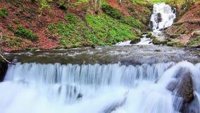 El agua cae sobre rocas a través de la maleza densa del helecho de un bosque cárpato almacen de video