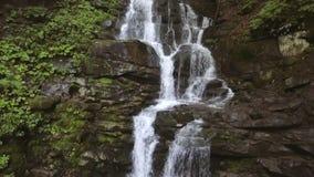 El agua cae sobre rocas a través de la maleza densa del helecho de un bosque cárpato metrajes