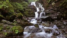 El agua cae sobre rocas a través de la maleza densa del helecho de un bosque cárpato almacen de metraje de vídeo