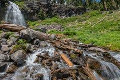 El agua cae a través de árboles viejos reventados Fotos de archivo