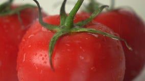 El agua de colada sobre los tomates maduros rojos con verde sale del tiro estupendo de la cámara lenta almacen de metraje de vídeo