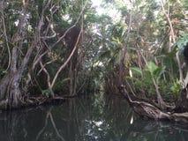 El agua de Dominica fijó para los piratas del Caribe Foto de archivo