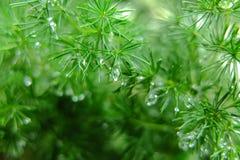 El agua de la gota en hierba Fotos de archivo