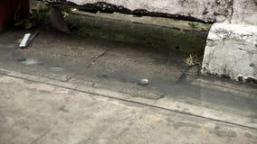 El agua de lluvia va abajo del dren de la alcantarilla de la calle almacen de video