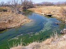 El agua de manatial se fuga dentro de Ash Meadow National Wildlife Refuge, Nevada Fotografía de archivo libre de regalías