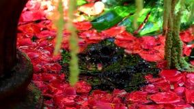 El agua del goteo en una fuente llenó de las flores almacen de metraje de vídeo
