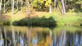El agua del lago del bosque de la reflexión de la silueta del árbol del otoño crece la orilla almacen de metraje de vídeo