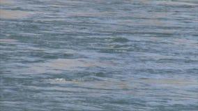 El agua está fluyendo suavemente en el río almacen de video