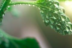 El agua macra cae en una hoja verde en la luz del sol Imagen de archivo libre de regalías