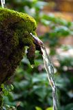 El agua que fluye de la roca con los helechos verdes alrededor Imágenes de archivo libres de regalías