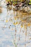 El agua refleja con la hierba y la flor amarillas en el prado Foto de archivo