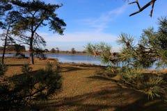 El agua y los árboles de la arena ajardinan en los Países Bajos fotografía de archivo