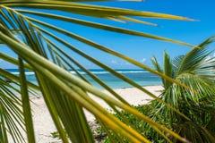 El ajardinar del Caribe Imagen de archivo libre de regalías