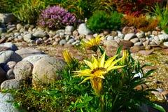 El ajardinar hermoso con las plantas hermosas, las flores y la cama de cala seca de la corriente en jardín el día soleado Foto de archivo