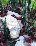 El ajardinar seco del jardín de rocalla del estilo tropical Fotos de archivo libres de regalías