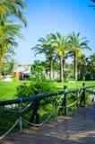 El ajardinar tropical con el establecimiento y palmeras Foto de archivo