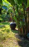 El ajardinar tropical del jardín imagen de archivo