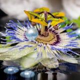 El ajuste del balneario de la flor de la pasionaria, helecho de la rama, apiló las toallas, z Fotografía de archivo