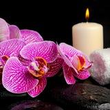 El ajuste del balneario de la ramita peló la orquídea violeta (el phalaenopsis) Imagen de archivo