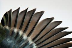 El ala y la pluma del pájaro Fotografía de archivo libre de regalías