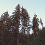 El alcanzar de los árboles Fotografía de archivo