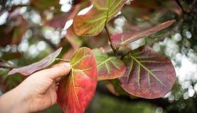 El alcanzar para las hojas en árbol fotos de archivo