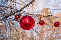 El alerce ramifica en el invierno, adornado para la Navidad con las bolas rojas de cristal grandes, contra el cielo, paisaje fest Fotografía de archivo