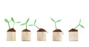 El almácigo crece de bloque de madera Fotografía de archivo libre de regalías