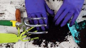 El alm?cigo que crec?a de suelo f?rtil fue cercado suavemente con las manos, concepto de protecci?n ambiental y la protecci?n almacen de video