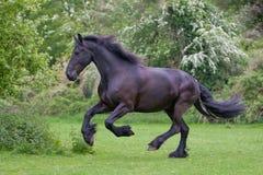El alzarse del caballo Imágenes de archivo libres de regalías