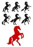 El alzarse para arriba y siluetas de los caballos que se encabritan Fotografía de archivo