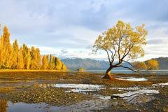 El amanecer solitario del árbol Imagen de archivo