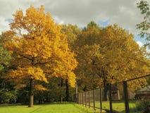El amarillo brillante es el color principal del otoño Foto de archivo