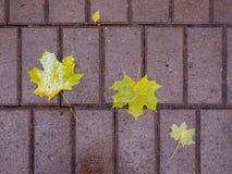 El amarillo caido-abajo se va en una trayectoria mojada en el parque en la caída Fotos de archivo