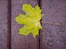 El amarillo caido-abajo se va en una trayectoria mojada en el parque en la caída Foto de archivo