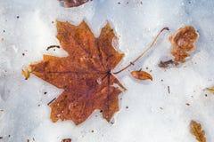 El amarillo caido deja acostarse en nieve de fusión Fotos de archivo
