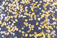 El amarillo caido deja el fondo fotos de archivo
