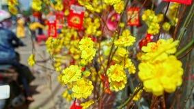 El amarillo cercano florece las decoraciones para TET en Vietnam metrajes