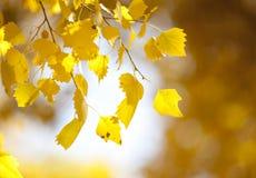 El amarillo deja el fondo imagen de archivo libre de regalías