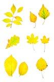El amarillo del otoño deja la colección Imagen de archivo libre de regalías
