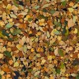El amarillo del otoño se va en el fondo inconsútil del agua Fotos de archivo libres de regalías