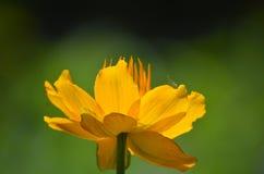 El amarillo es mágico Imágenes de archivo libres de regalías